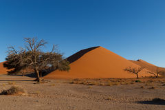 Dune 45 from Namibian desert. Red dunes on the road to Sossusvlei, Namibia Stock Photo