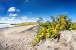Dune near the lake royalty free stock images