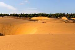 Dune ondulate sabbiose gialle con la foresta verde a fondo Immagini Stock