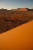 Dune orange dans Namib Image libre de droits