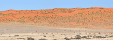 Dune and Oryx panorama of the Namibrand area in Namibia Stock Images