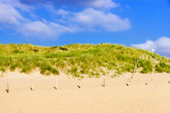 Dune over sand beach on North sea in Netherlands Stock Image