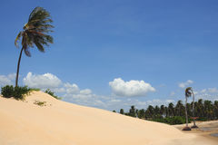 Dune with palm. Sand dunes with a palm tree on top Royalty Free Stock Photos