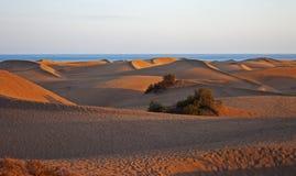 Dune panorama at sunset Stock Photography