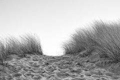 Dune pathway BW. Pathway over a dune between beach grass, monochromatic version Royalty Free Stock Photography