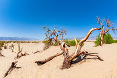 Dune piane del Mesquite nel parco nazionale California di Death Valley Fotografie Stock