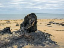 The Dune of Pilat: Black coal on the white sand beach, in the Arcachon Bay area, nearby Bordeaux, France royalty free stock image