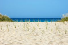 Dune plants and ocean. The image shows some dune plants with the ocean at the horizon Stock Photos