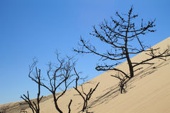 Dune of Pylat, France Stock Photo