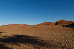 Dune 45. Red dunes on the road to Sossusvlei, Namibia Royalty Free Stock Images
