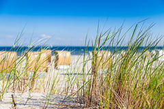 Dune with reed Stock Photography
