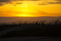 Dune Reeds Blowing at Sunset Royalty Free Stock Photos