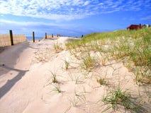 Dune Regeneration. Photo taken of protected sand dunes at Henley Beach, Adelaide, South Australia royalty free stock image
