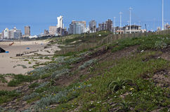 Dune Rehabilitation on Durban Beachfront with Buildings in Backg Royalty Free Stock Photography