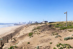 Dune Rehabilitation Taking Place on Durban's Golden Mile, South Royalty Free Stock Photo