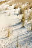 dune with sea gras royalty free stock images