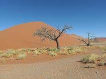 Dune 45. In the Sossusvlei area of the Namib Desert in Namibia Stock Image