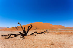Dune 45 in sossusvlei Namibia with dead tree Stock Images