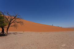 Dune 45 in sossusvlei Namibia with dead tree. Best of Namibia landscape, Dune 45 is the biggest dune in the world Stock Photo