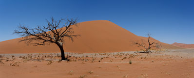 Dune 45 in sossusvlei Namibia with dead tree Stock Photo