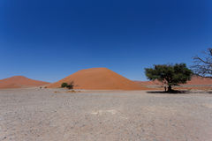 Dune 45 in sossusvlei Namibia with dead tree Stock Photography