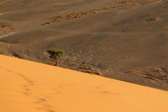Dune 45. Sossusvlei  dune 45 namibia desert Royalty Free Stock Image