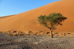 Dune 45. Sossusvlei  dune 45 namibia desert Royalty Free Stock Photos