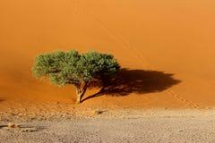 Dune 45. Sossusvlei  dune 45 namibia desert Stock Photo