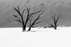 Dune 45. Sossusvlei  dune 45 namibia desert Royalty Free Stock Photo