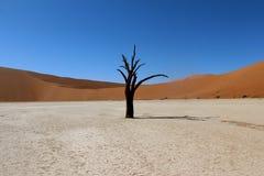 Dune 45. Sossusvlei  dune 45 namibia desert Stock Photos