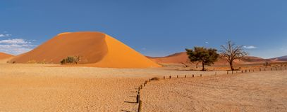 Dune 45 in Sossusvlei, Namibia desert. With dead acacia tree. Namibia wilderness royalty free stock images