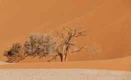 Dune 45 in Sossusvlei, Namibia desert. With dead acacia tree. Namibia wilderness royalty free stock photos