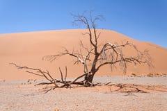 Dune in Sossusvlei, Namibia Royalty Free Stock Photos