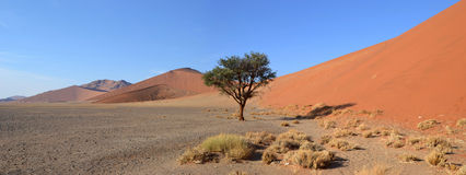 Dune 45. Is a star dune in the Sossusvlei area of the Namib Desert in Namibia Royalty Free Stock Image
