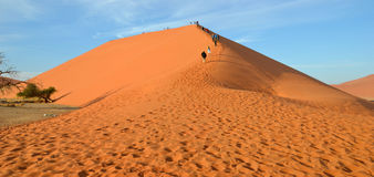 Dune 45. Is a star dune in the Sossusvlei area of the Namib Desert in Namibia Royalty Free Stock Images