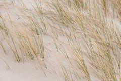 Dune su Amrum Fotografie Stock Libere da Diritti