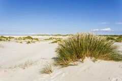 Dune su Amrum, Germania Immagini Stock