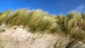 Dune tops with marram grass Royalty Free Stock Photography