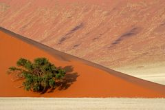 Dune, tree and grass, Namibia Stock Images