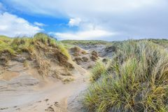 Dune landscape Dutch North Sea coast with slopes with dune grasses and bare valleys Stock Image