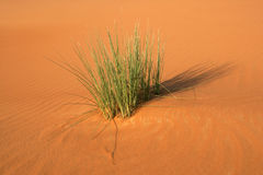 Dune Vegetation Stock Photography