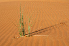 Dune Vegetation Stock Photo