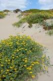 Dune vegetation Stock Photography