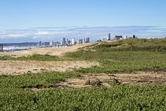Dune Vegetation against Distant Durban City Skyline Stock Photo