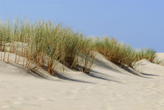 Dune and vegetation in France Stock Photography