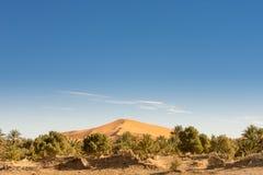 Dune and vegetation, Merzouga, Morocco. View of dune and vegetation, Merzouga, Morocco Stock Images