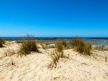 Dune with vegetation, sky and sea in the background Stock Image
