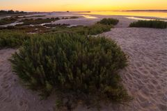 Dune vegetation. View of the dune vegetation in the early morning in the beach Stock Image