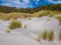 Dune Vegetation at Wharariki Beach Stock Photo