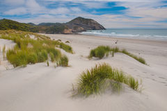 Dune vegetation Wharariki Beach, South Island, New Zealand Stock Photos